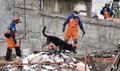 メキシコ地震、「72時間」経過後も捜索継続 日本などの救助隊も活動