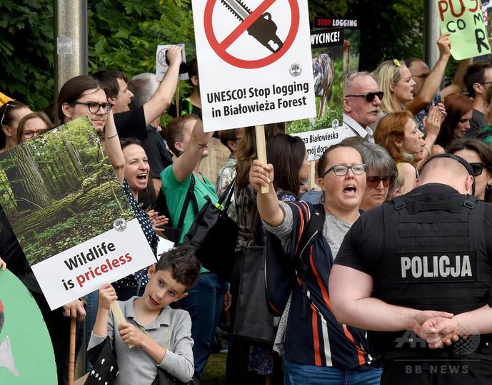 欧州最大規模の原生林、ポーランド政府に伐採中止命令 欧州司法裁