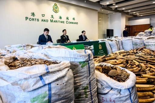 希少なセンザンコウのうろこと象牙押収、8.6億円相当 香港