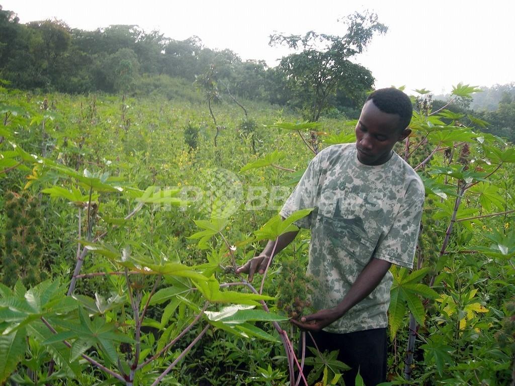 アフリカで農地を買収する中国を批判、独首相個人代表