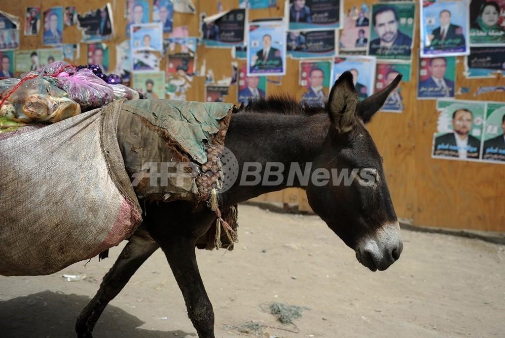 「ロバ爆弾」で4人死傷 アフガニスタン