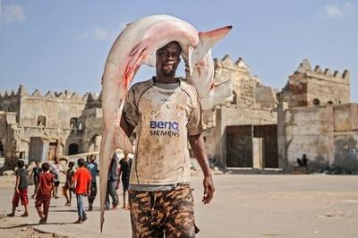 大物は頭で!サメを運ぶ漁師たち ソマリア