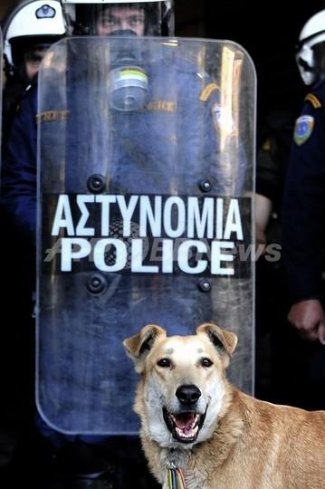ギリシャ抗議犬がネットで人気、タイム誌「今年の人」に写真