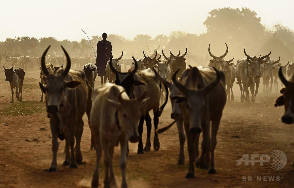 南スーダンで家畜をめぐる部族間襲撃 60人死亡、数十人負傷