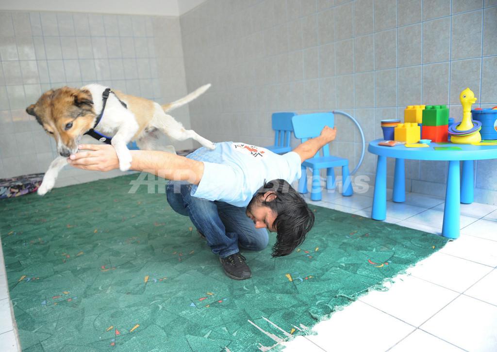 ルーマニア政府が野犬の処分検討、賛否めぐり激論に