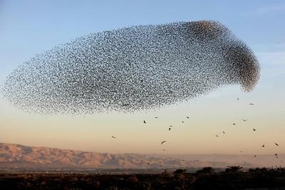 国境を自由に行き来する鳥たち イスラエル