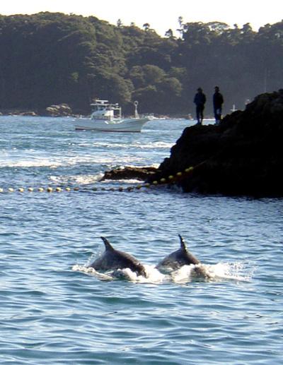 「イルカ追い込み漁は動物愛護法違反」、 日本NGOが提訴