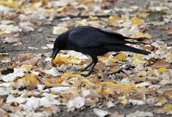 車にひかれる鳥は「鳥頭」だった、研究