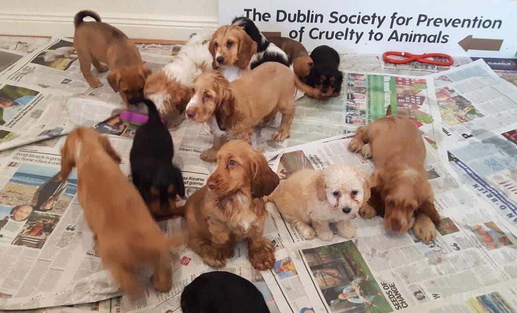 「犬繁殖業の中心地」子犬の密輸出に悩むアイルランド