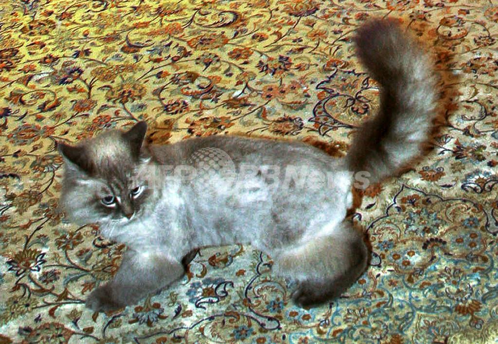 「ネコは無事です」、露大統領の愛猫の行方 ネットで話題に