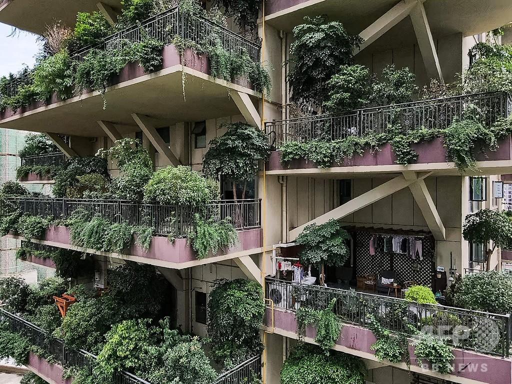 「都会の楽園」のはずが…緑あふれる集合住宅、蚊の来襲でほぼ無人に 中国