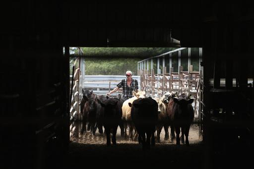 家畜への抗生物質投与にガイドライン、米FDA 耐性菌懸念で