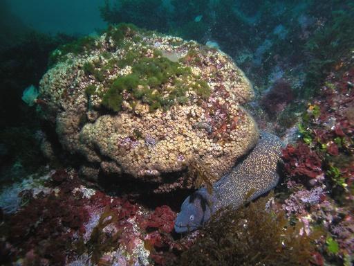 温暖化で「死滅」のサンゴ、現存コロニーで回復を初確認
