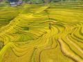 黄金色の「指紋」 中国・貴州省榕江県