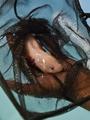 「水の怪獣」ウーパールーパーが絶滅の危機に、メキシコ