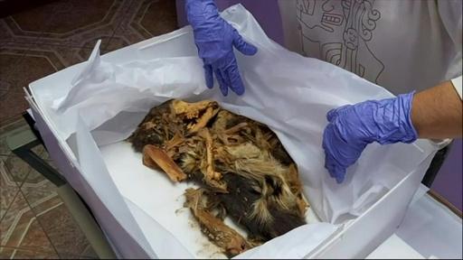 動画:ペルーの遺跡で犬の死骸見つかる、1000年以上前のもの