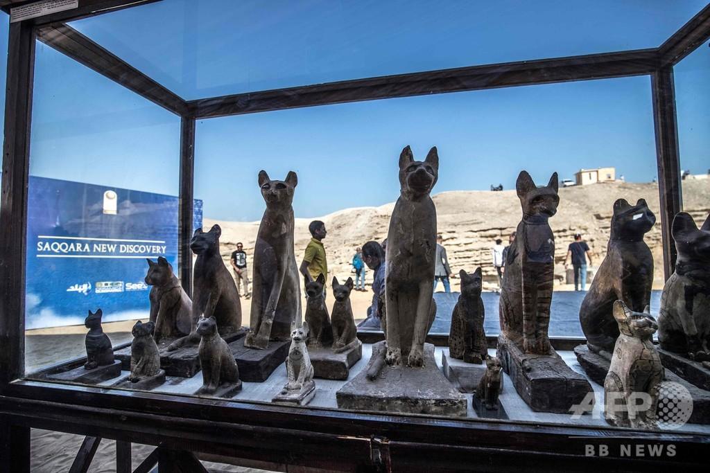 ライオンの赤ちゃんのミイラ、古代エジプトの猫女神の神殿の下で発見