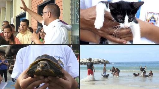 動画:「世界動物の日」に教会などで動物たちを祝福