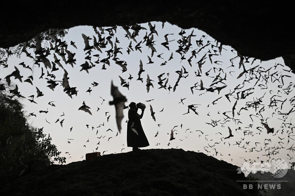 【今日の1枚】コウモリの大群を操る