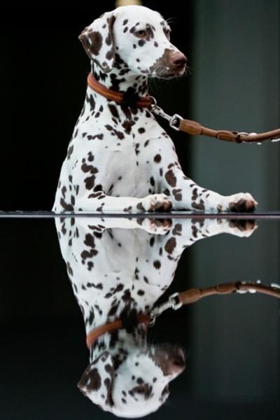「美犬」が大集合、国際ドッグショーをPR ドイツ