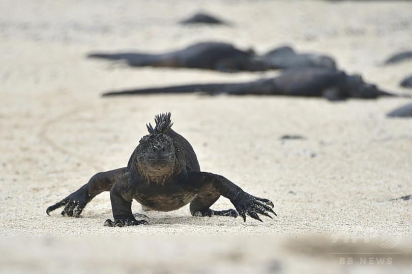 ガラパゴスの生態系に迫るエルニーニョの脅威