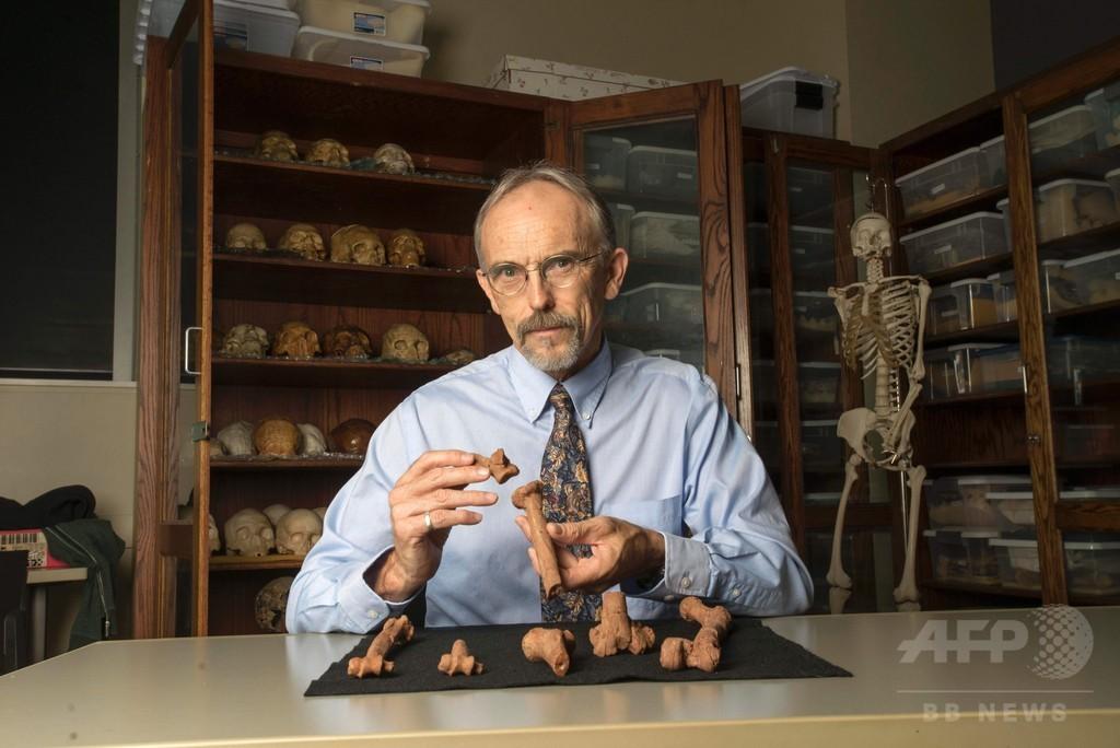 猿人ルーシー、木から転落死か 新たな骨格分析で示唆