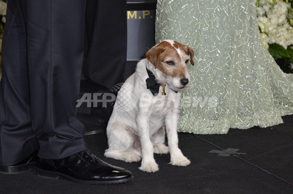 『アーティスト』のスター犬アギー、俳優引退へ
