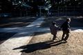 認知症という時限爆弾、高齢化社会・日本に迫る危機