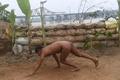 全裸になって社会規範も脱ぎ去る、ベトナムのヌーディスト