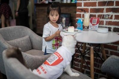 猫店員がご注文伺います、呼んでも来ないかもしれないけど 杭州のカフェ