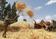 次世代の「スーパーフード」なるか、エチオピアの穀物テフ