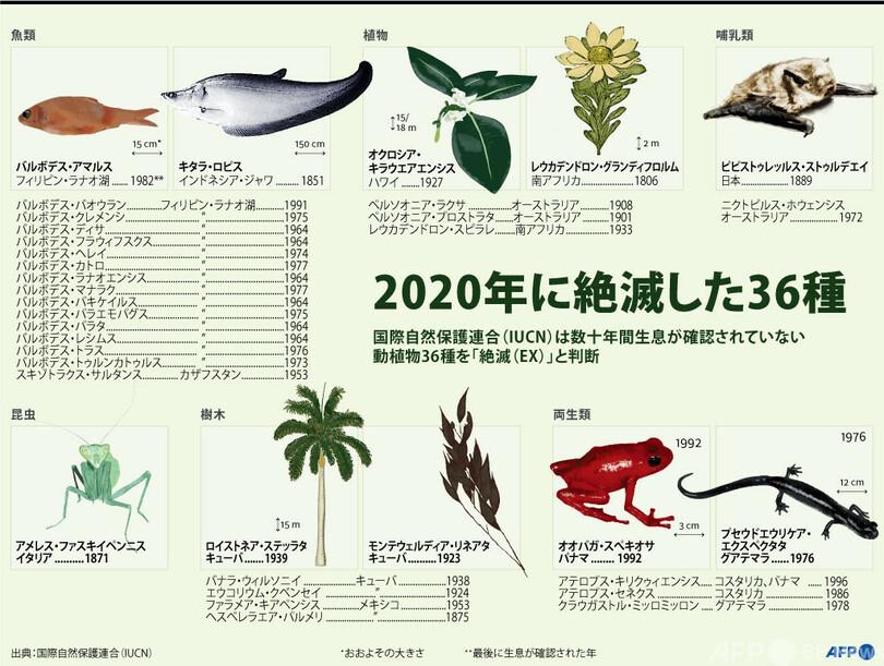図解】2020年に絶滅した動植物 写真1枚 国際ニュース:AFPBB News