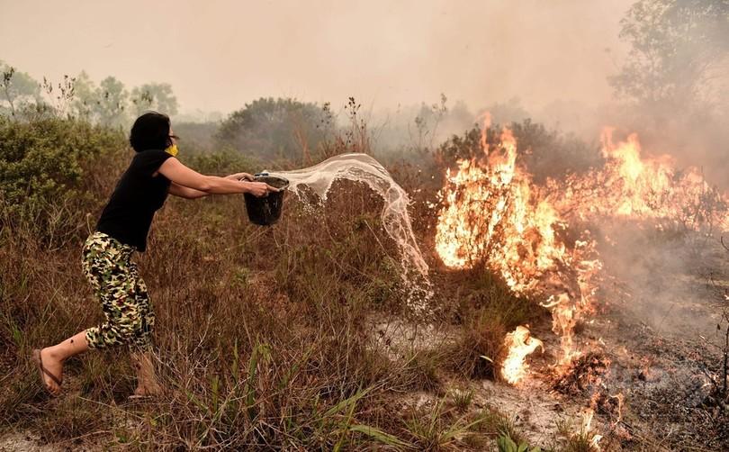 2015年の東南アジア煙霧、10万人が早死にか 米大学研究