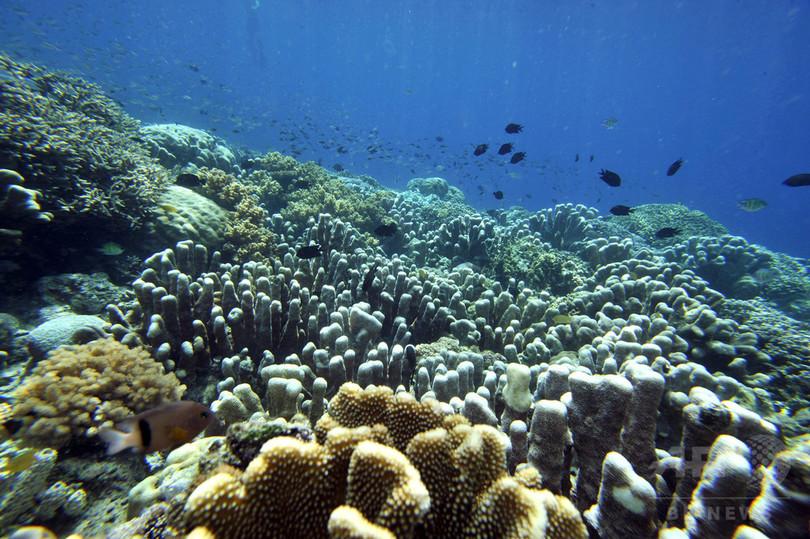 太平洋サンゴ礁、深刻な白化 沖縄周辺は最大70%が被害 報告