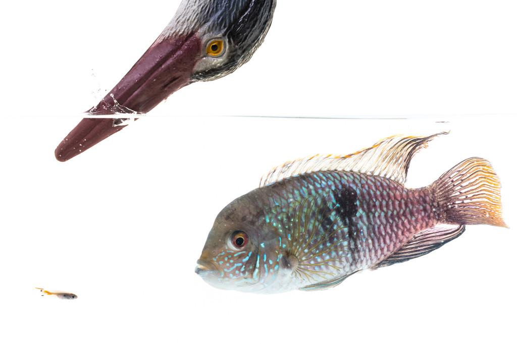 魚にも性格がある 問題を回避するか探るか個体によって差 英研究