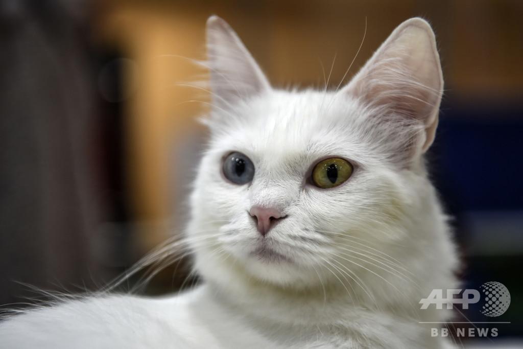 ニャンとか助かった! 愛猫のおかげで土砂災害から生還 イタリア