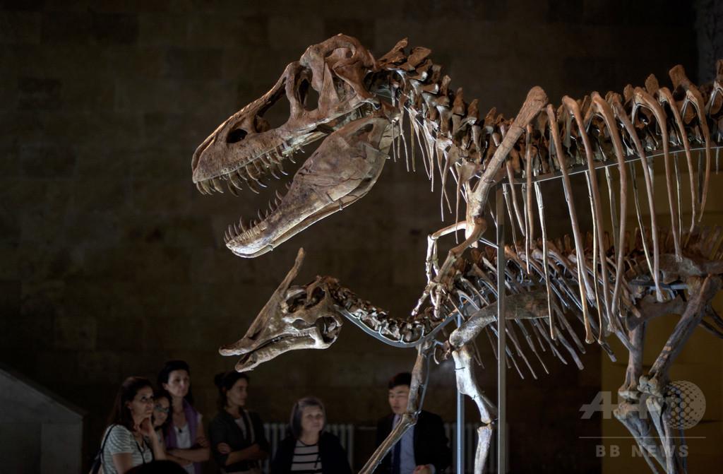 恐竜の進化史書き換えか 「革命的」新系統樹、英チームが発表