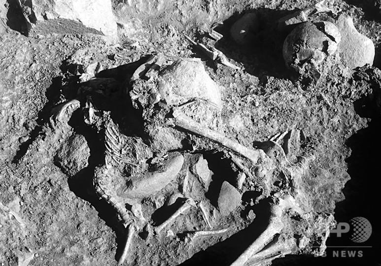 新石器時代の「愛犬」、人と一緒に埋葬 研究