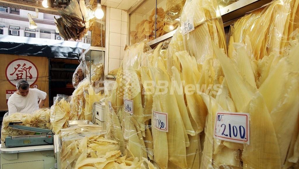 フカヒレ需要でサメが激減、オーストラリア調査