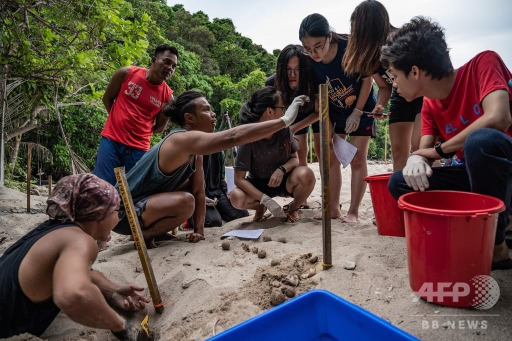 密漁者からレンジャーに、ウミガメ保護への小さな一歩 マレーシア