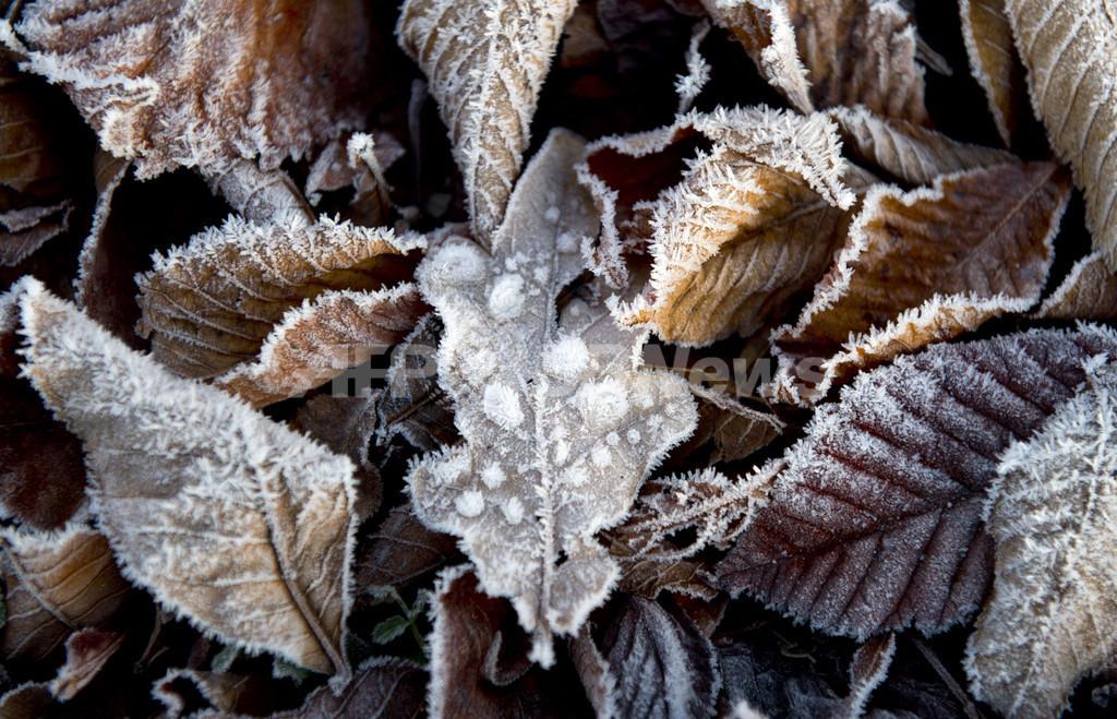 紅葉した葉っぱに霜、冬も間近のドイツの風景