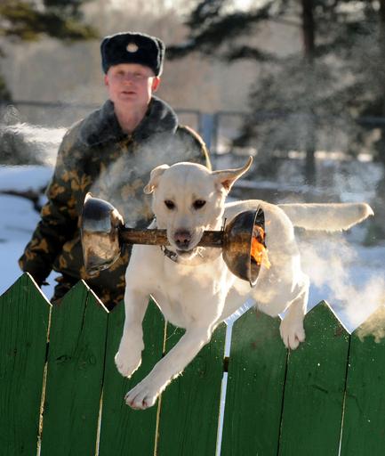 燃える炎もへっちゃら、軍用犬の訓練 ベラルーシ