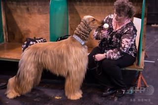 人間の嗅覚、本当はイヌ並み? 俗説覆す研究報告