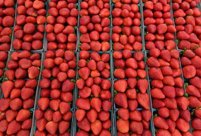 イチゴへの縫い針混入騒動で50歳の女を逮捕、豪警察