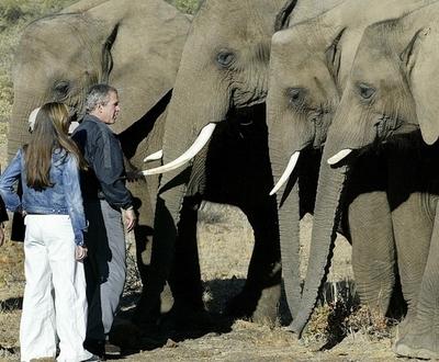 増加するゾウに困った農民たちがとった、「スパイシーな」対策 ボツワナ