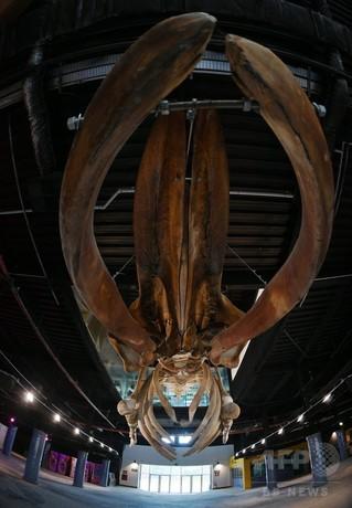 南米最大の水族館、ブラジル・リオに来月オープン