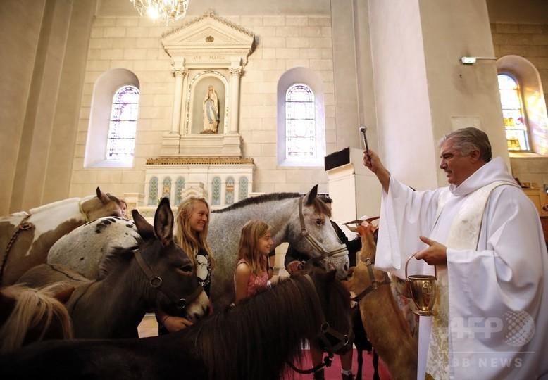 世界動物デー、祝福受ける動物たち 写真12枚 国際ニュース:AFPBB News