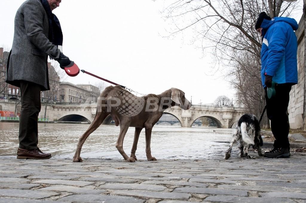 ペットのふん害対策、パリ郊外の町で監視カメラ活用