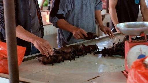 動画:ウイルス懸念のコウモリ肉、市場で売買続く インドネシア
