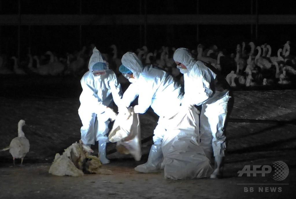 台湾で鳥インフルH5N8型初検出、家禽類1万6000羽殺処分へ